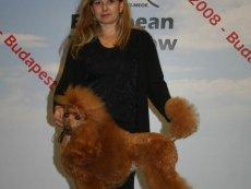 Evropská výstava psů 2008 - European Dog Show 2008