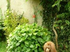 Jůlinka čeká štěňátka