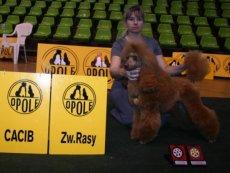 Výstavy 2008 - Dogshows 2008