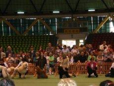 Výstavy 2007 - Dogshows 2007